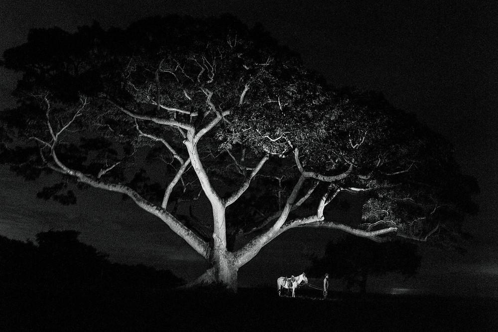 Por los caminos tomados por los Llaneros, un grupo de vaqueros que viven y viajan por las sabanas de la cuenca del Orinoco en Colombia y Venezuela