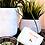 "Thumbnail: SOIN CORPS - Florame ""Verveine"" - Savon traditionnel 100 g"