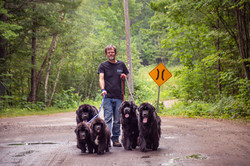 Newfoundland dogs, Muskoka
