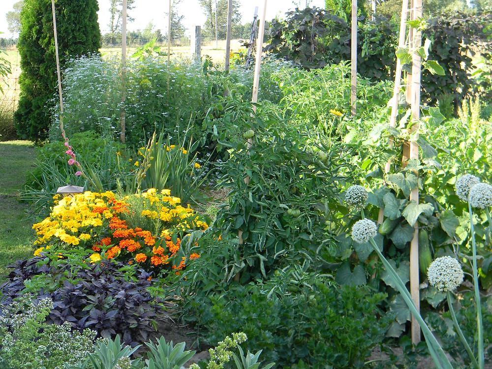 Our 2013 Garden