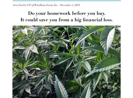 Why you Should Purchase Your Hemp Seeds From a Genetics and Breeding Company