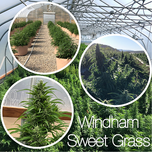 Windham Sweet Grass Seed Packs