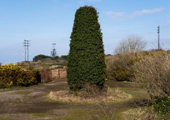 Nature's chimney
