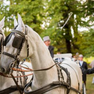Wedding Day  @Villa Marazzi La sposa ha scelto la carozza con i cavalli bianchi per un ingresso in villa da vera principessa.
