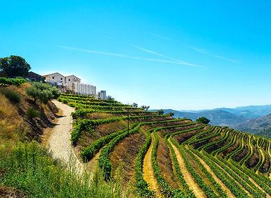 5 aziende-vinicole-in-vendita-vale-douro