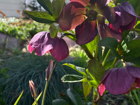 Favorite Plant Of The Month: February