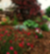 Natural Landscaping, Dianthus, Heuchera, Coral Bells, Blue Oat Grass, Landscape Details, Shade plants, Part Sun plants
