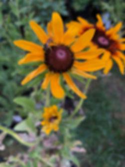 WHG_Bee_closeup