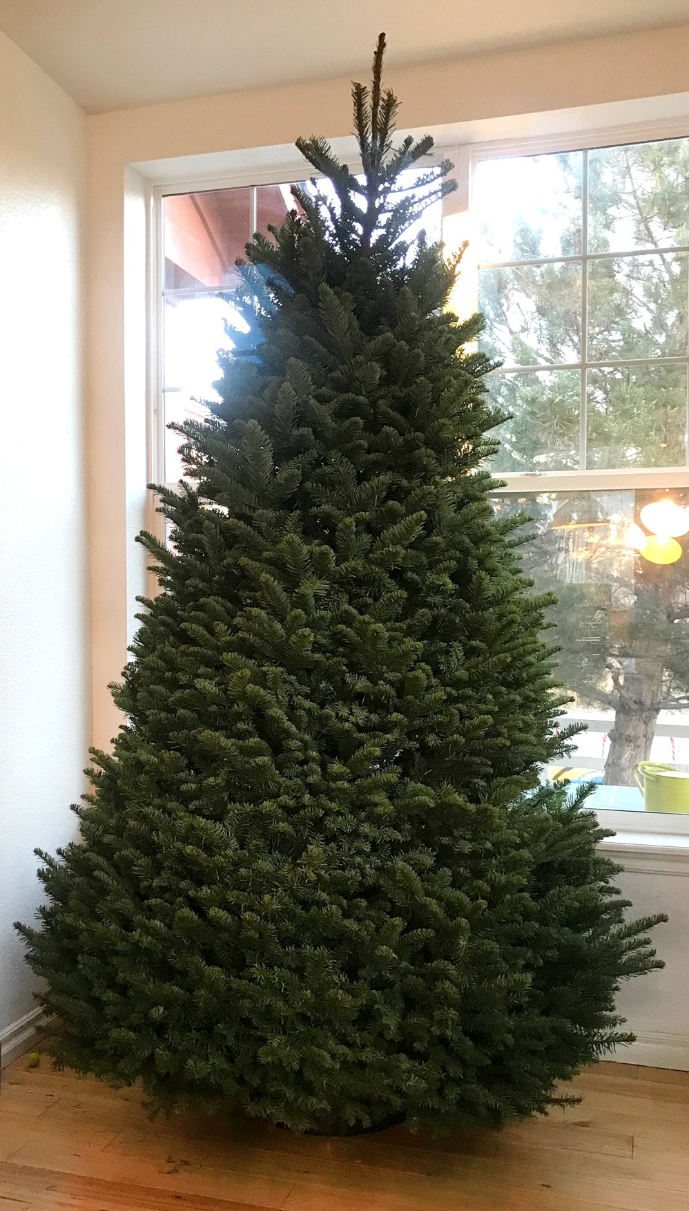 A beautiful, fresh, full and lush Noble Fir Christmas tree ready to be decorated.