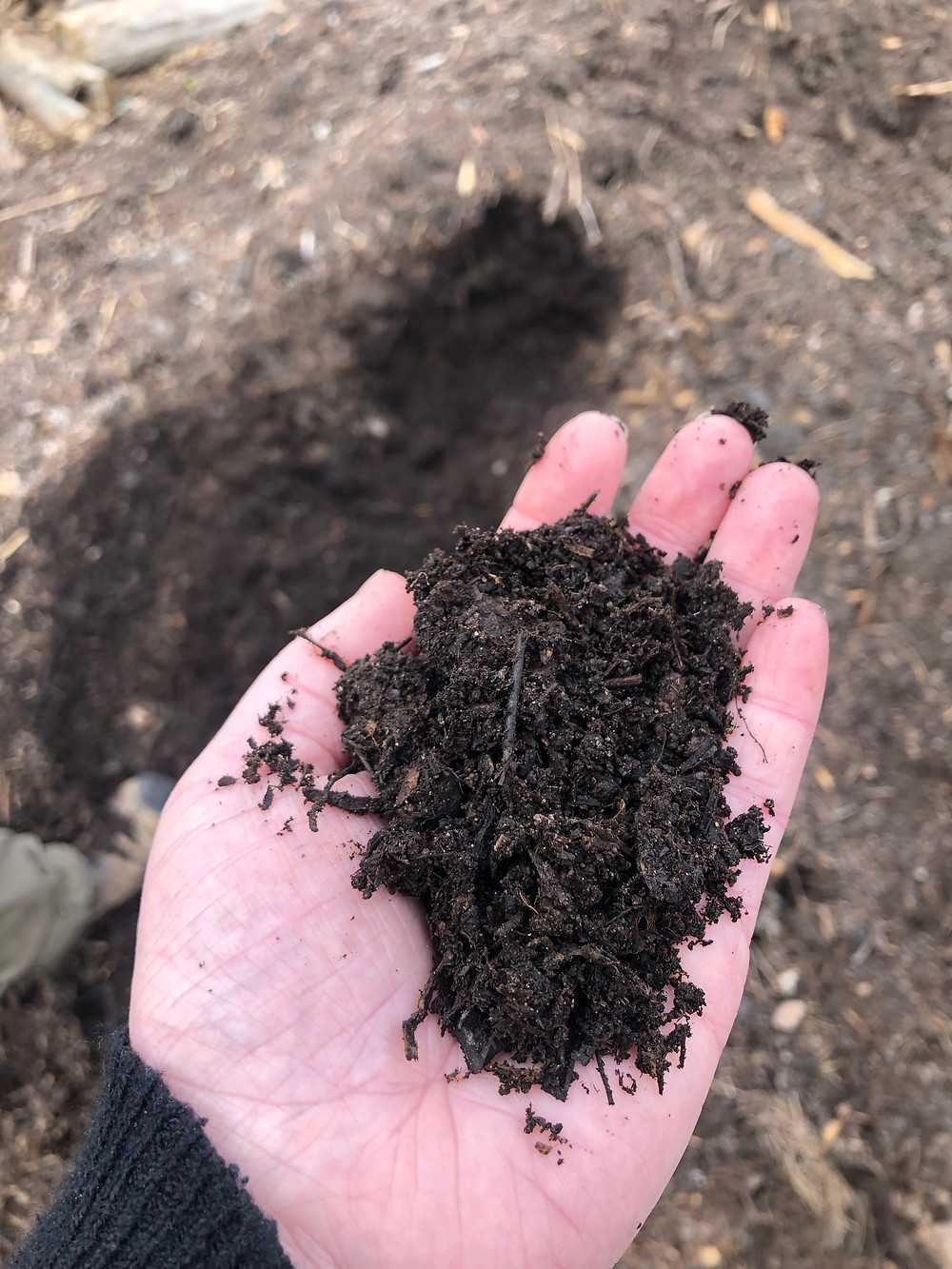 Hand holding forest compost soil