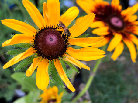 Why Pollinators Want You To Kill Your Lawn!