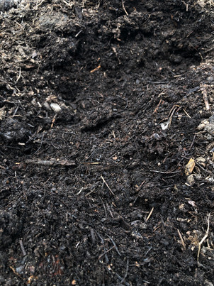 Forest soil, compost, forest mulch
