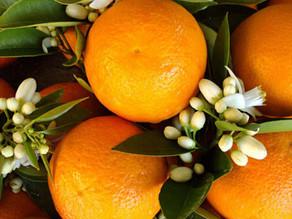 Orange Flower Carnival in Adana
