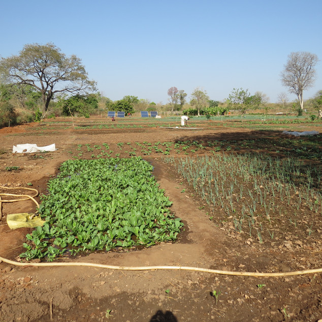 our solar pump irrigation.JPG