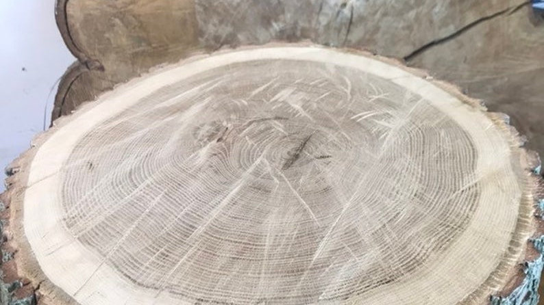 "Beautiful 19"" English Oak Rustic Log Slice"