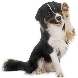 my dogs daycare hold paw up.png
