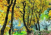 Website Tuscany-572.jpg