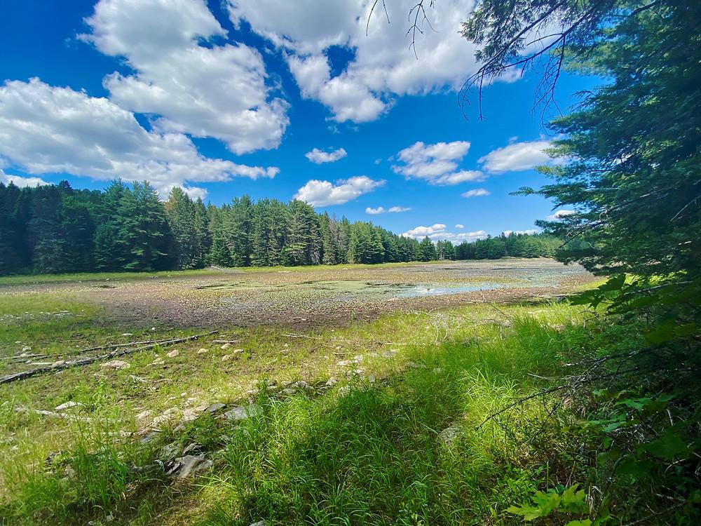 Marshland in Algonquin Park, Ontario