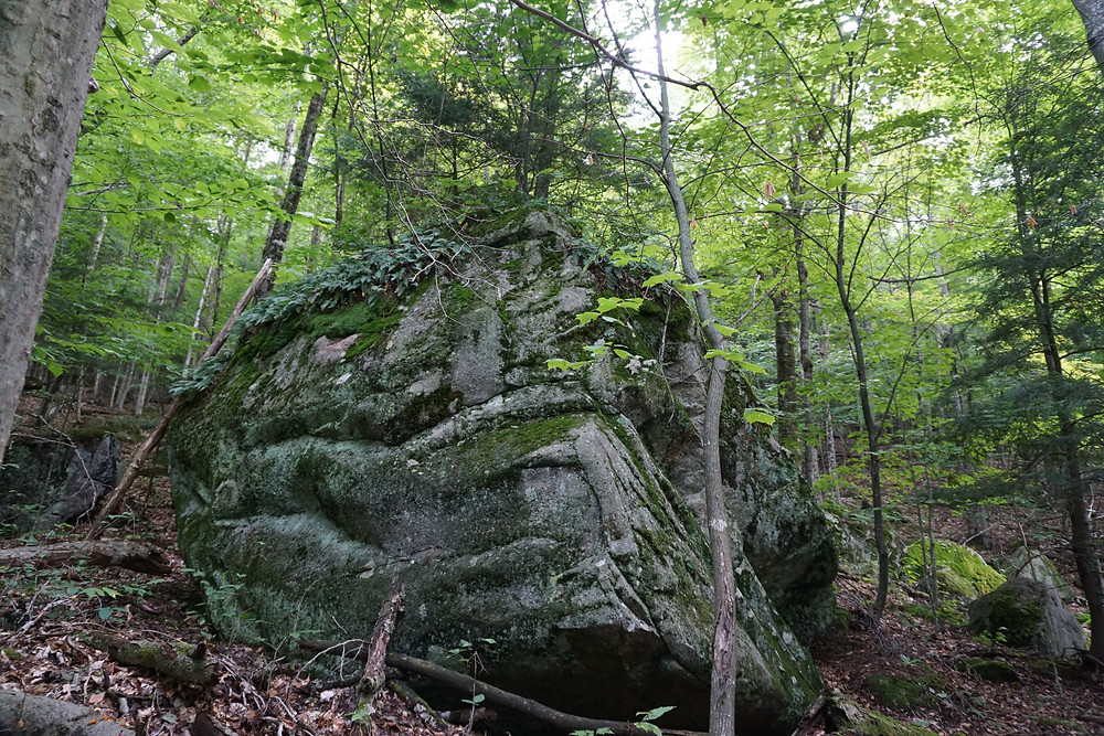 Photography of a boulder in the middle of the forest