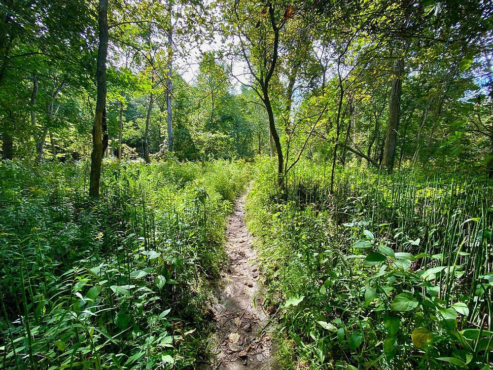 Daytime photography of Mast Trail in Rouge Park with plants and trees