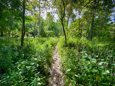 Trail Running - Mast Trail in Rouge Park, Ontario