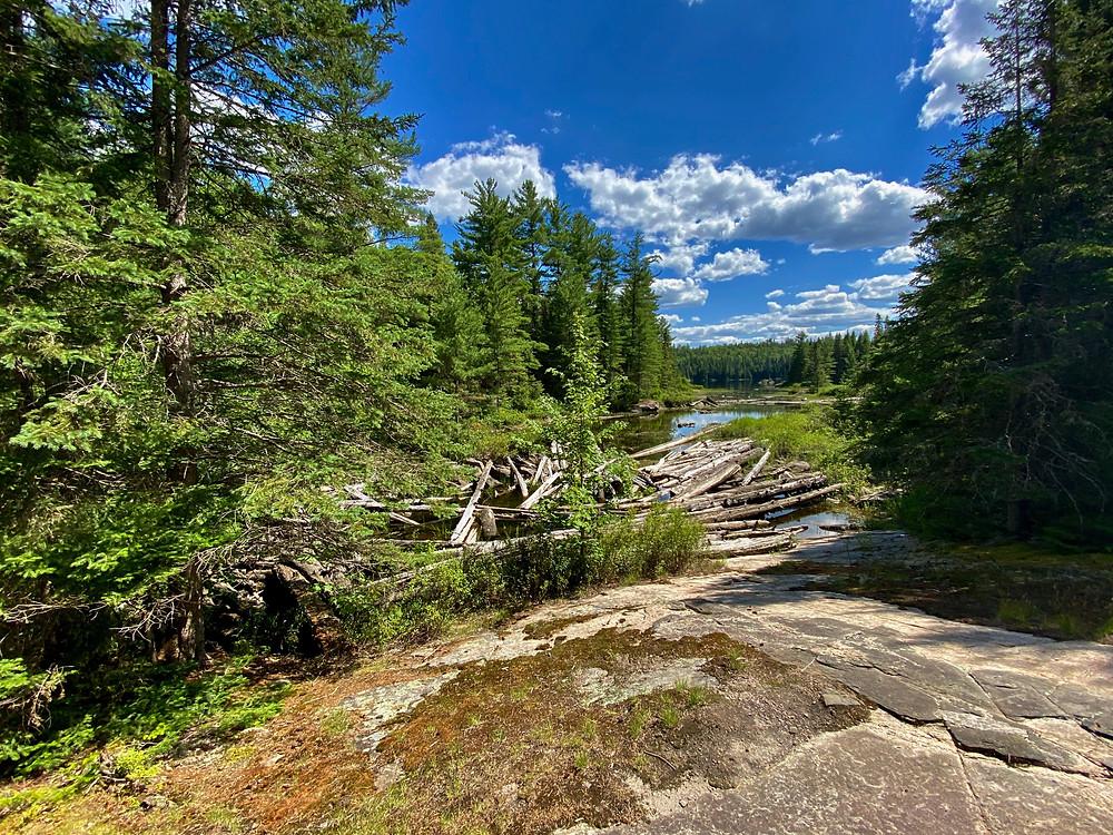 Trail in Algonquin Park, Ontario