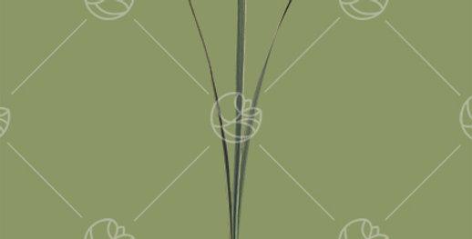 Lily Grass Tip x3