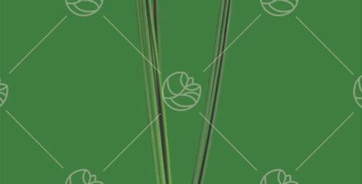 Papyrus Ikebana