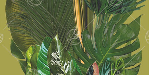 The Tropics HB Box