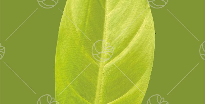 Phi Lemon