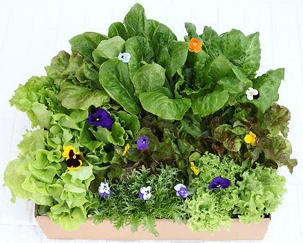 Veggie gift box