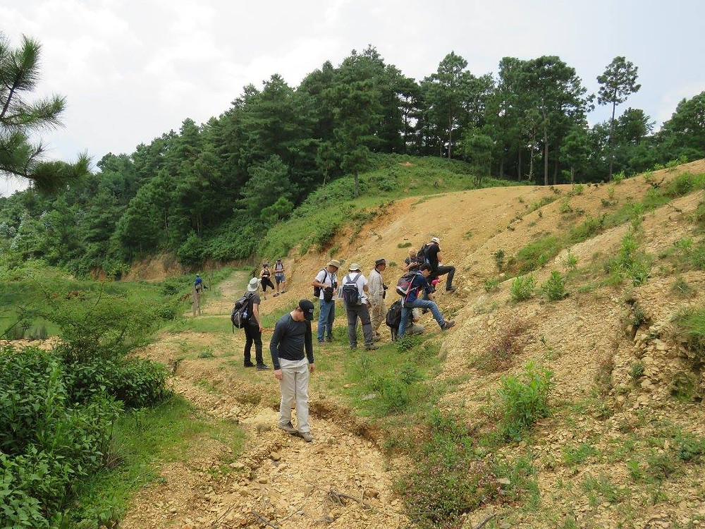 A group of people look at the ground and hillside, looking for fossils. The landscape is flat to the left with a hill to the right. In the forefront of the image, vegetation is scarce and the exposed ground is a yellow/brown colour. In the background of the image, there is lush vegetation of deep green trees and grass.