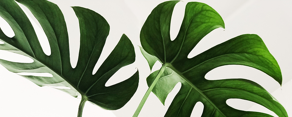 leaf-big.png