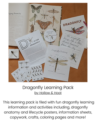 Dragonfly Learning Pack.png