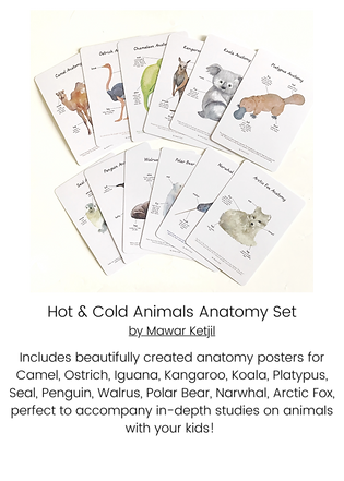 Hot & Cold Animals Anatomy Set.png