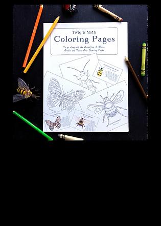 Butterflies, Bees & Beetles Coloring Bundle.png