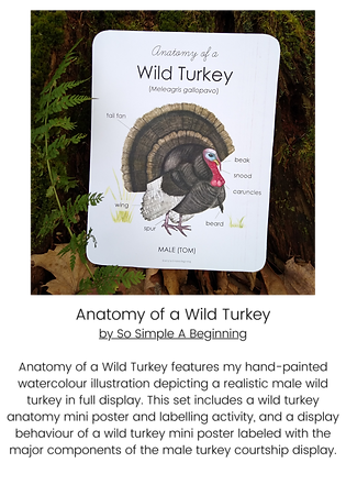Anatomy of a Wild Turkey Pack.png