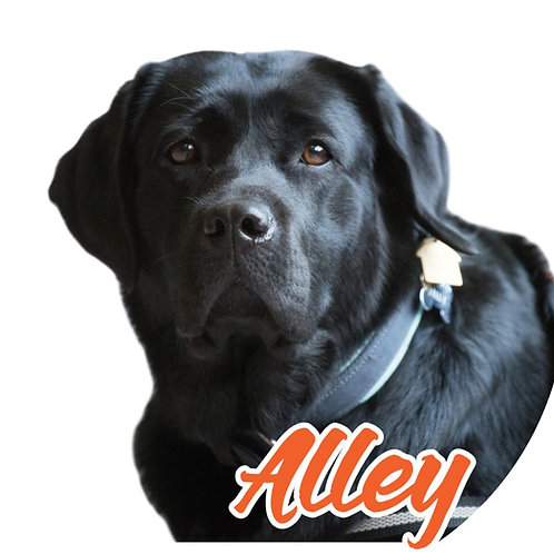Alley Sticker