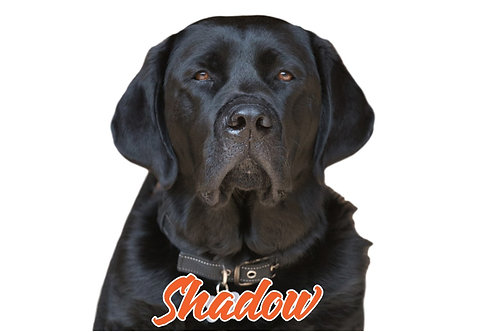 Shadow Sticker