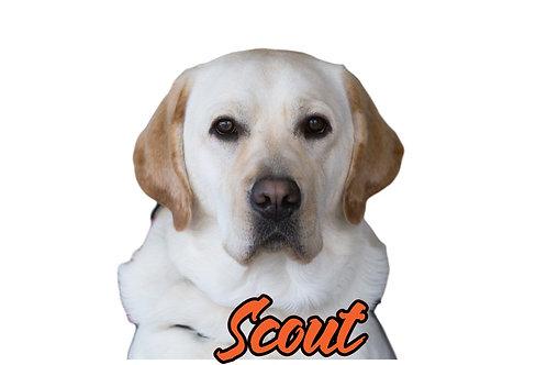 Scout Sticker