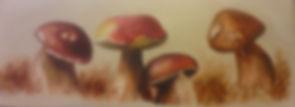 Champignons 20x50.jpg