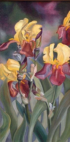 156-les iris jaunes.tif