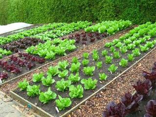 #Organic #Vegetable #Gardening Information