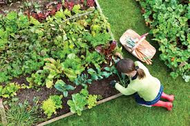 Great #Tips on How To Set Up a #Vegetable #Garden