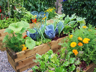 What Is #Organic #Vegetable #Gardening