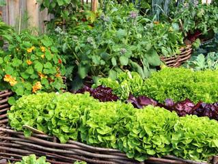 Companion Planting  #organicGardening #companionPlanting #eco-systems