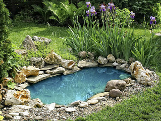 Create The Perfect Garden Pond