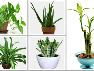 Tips For Healthy #Houseplants