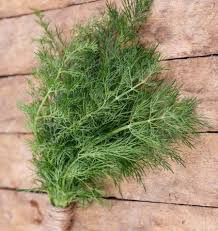 #Dill: The Most Important Culinary #Herb in Scandinavia