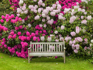 Growing and Caring For Rhododendrons and Azaleas